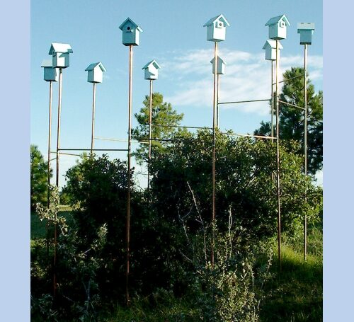Bluebird Ring Bird Houses