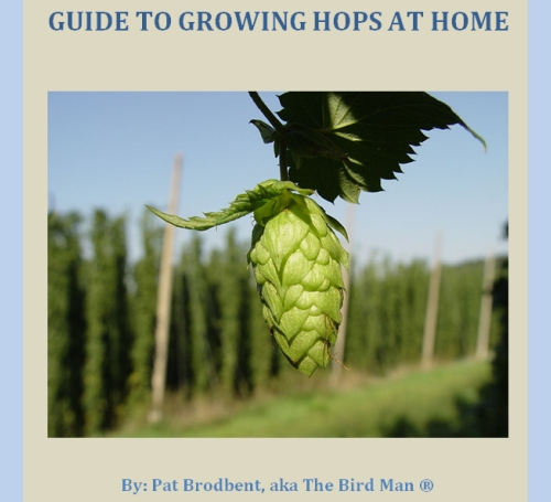 Guide to Growing Hops at Home