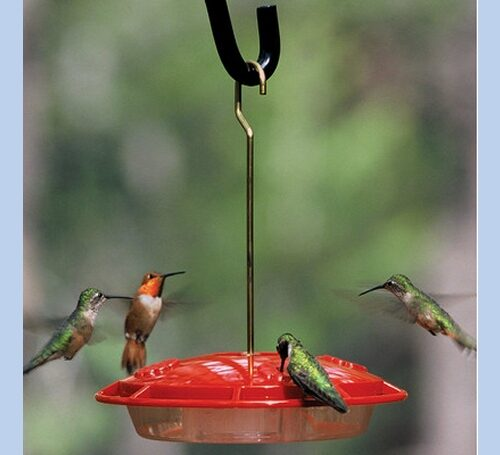 Hummingbird Feeders - Medium Bee Proof