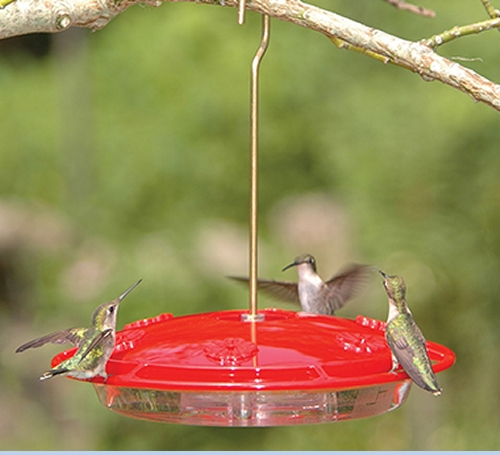 Hummingbird Feeder - Large