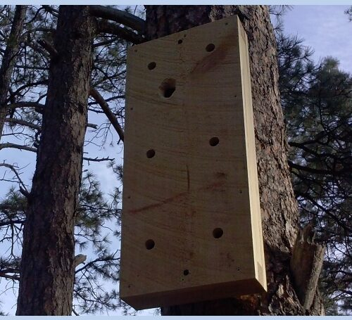 Woodpecker Sounding Board