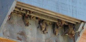 bat habitats