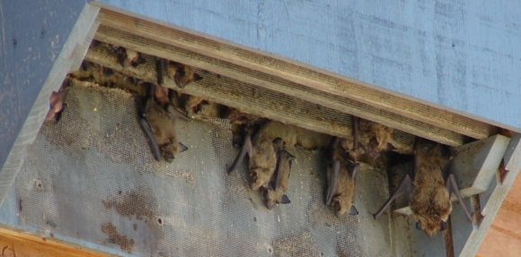 Bat House Placement