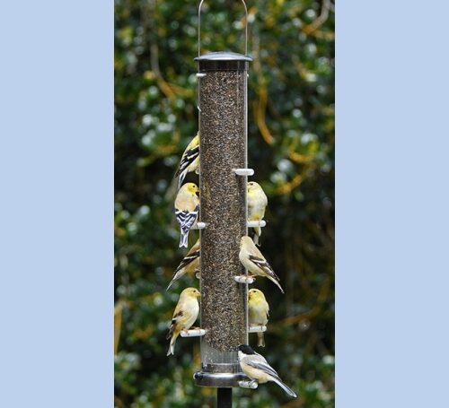 Large Tube Thistle Feeder
