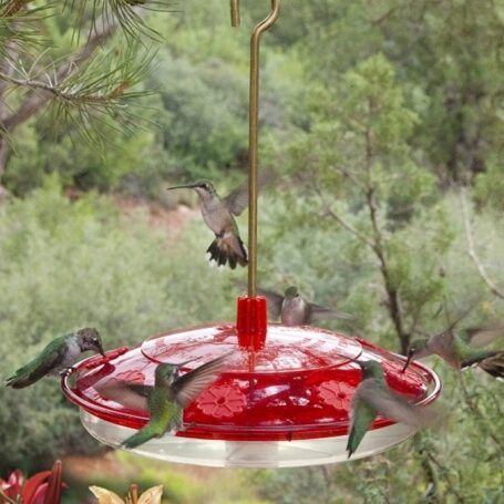 Hummingbird Feeder - Extra Large - Bee Proof