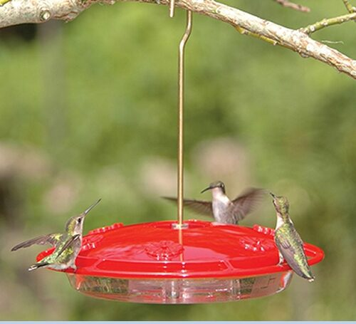 Hummingbird Feeder - Large