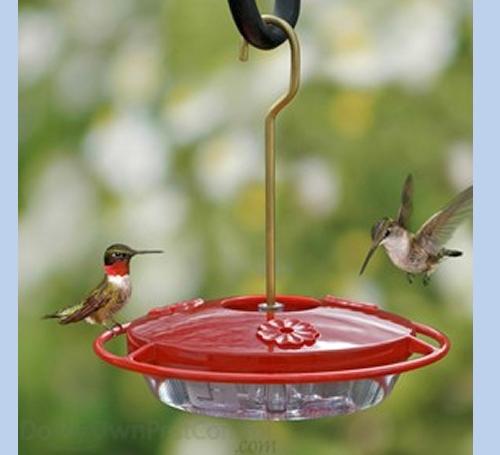 Hummingbird Feeder - Small