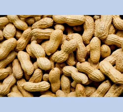 Peanuts for Birds