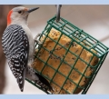 Suet Bird Food