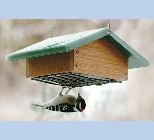 Upside Down Suet Feeder The Bird Man