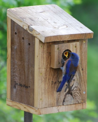 Wooden Birdhouses Blue Bird House Birdhouse Hole Size