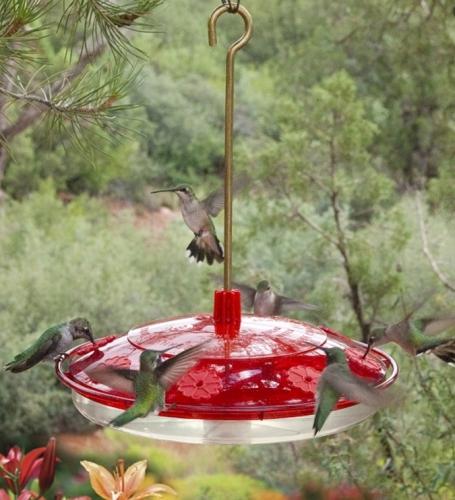 Hummingbird Feeder - Extra Large